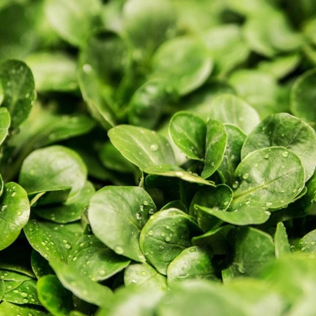 High-Protein Foods: Spinach/Greens