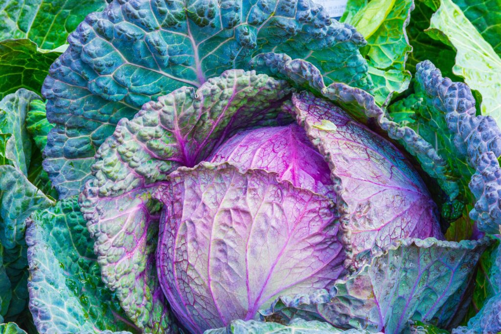 Cabbage - Tommy's Superfoods